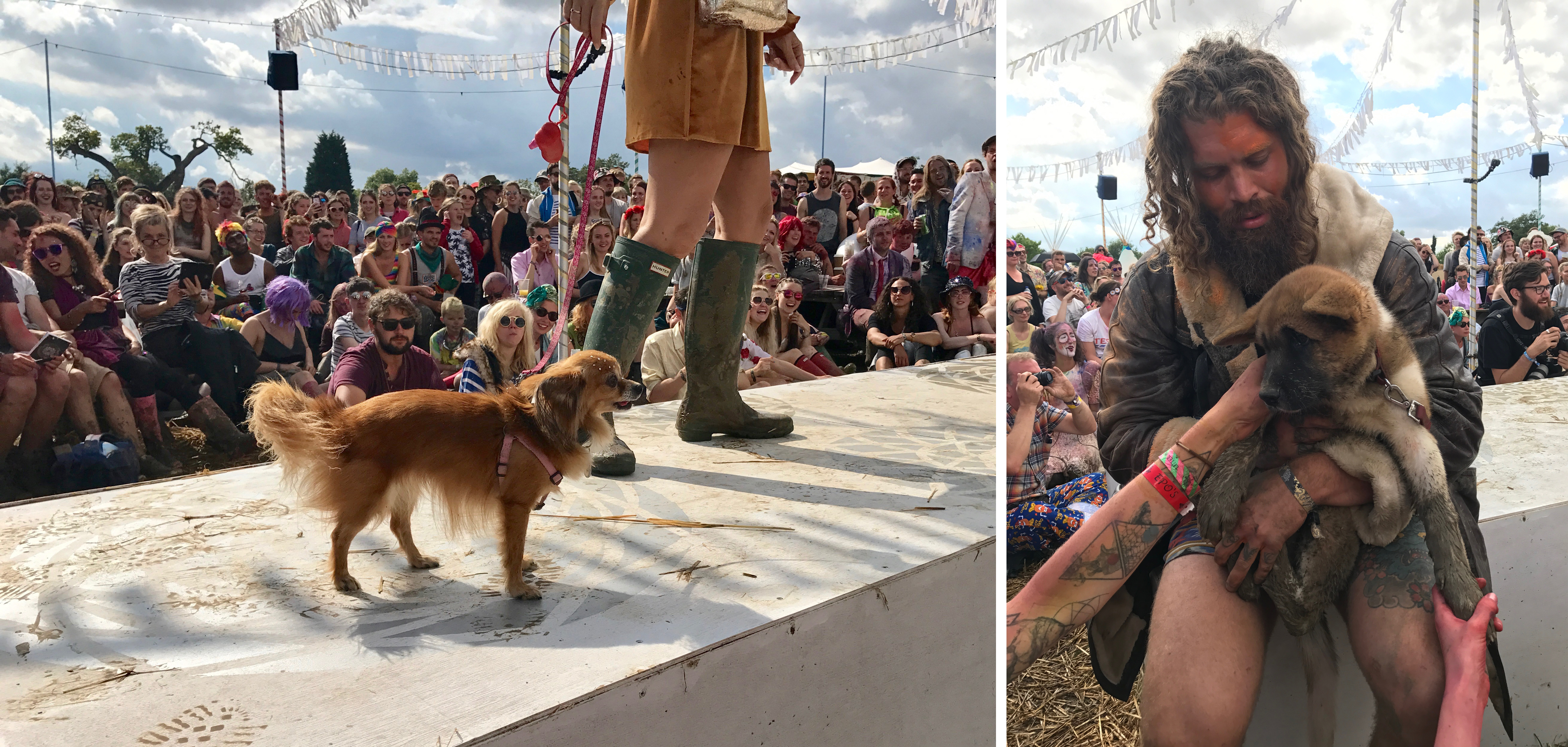 Two of the dogs int he dog sow at secret garden party on the catwalk